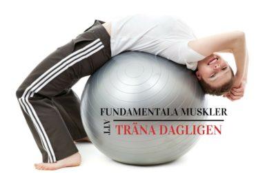 4 Fundamentala Muskler Som Du Kan Träna Dagligen